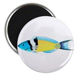 Bluehead Wrasse Magnets