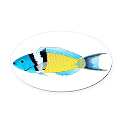 Bluehead Wrasse Oval Car Magnet