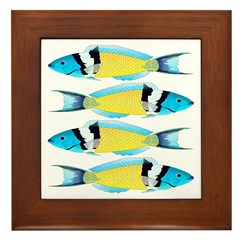 Bluehead Wrasse Framed Tile