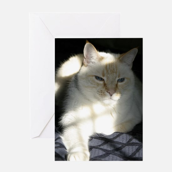 Flame Point Cat Greeting Card