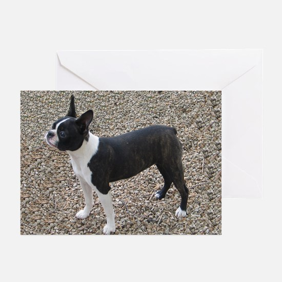 Boston Terrier Pup2 Greeting Cards (Pk of 10)