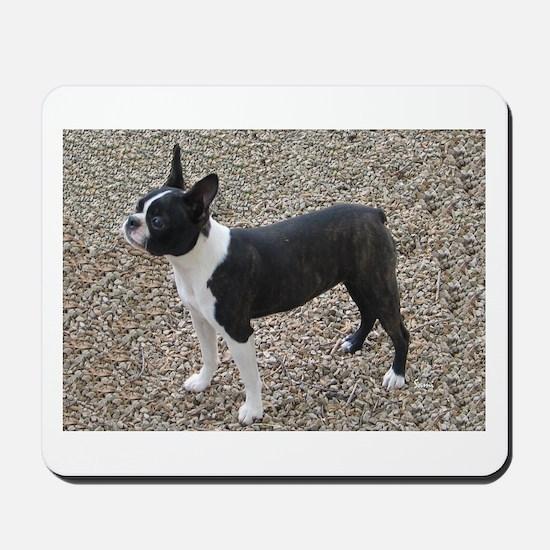 Boston Terrier Pup2 Mousepad