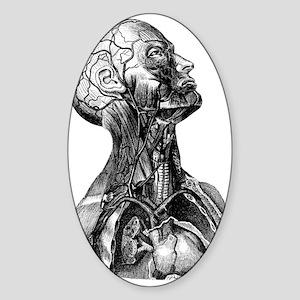Anatomy Oval Sticker
