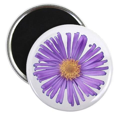 New England Aster Flower Magnet