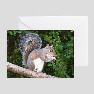 Squirrel on Limb Greeting Card