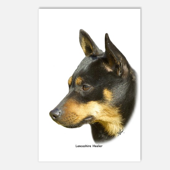 Lancashire Heeler 9R049D-16 Postcards (Package of