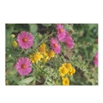 New England Aster/Heleniun Postcard (Package of 8)
