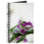Preying Mantis Notebook/Journal