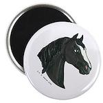 """Black Morgan Horse head 2.25"""" Magnet (100 pac"""