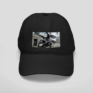 Museum of Natural History Black Cap