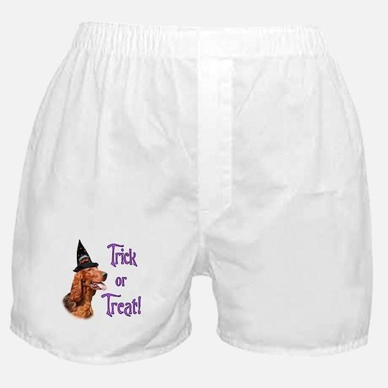 Irish Setter Trick Boxer Shorts