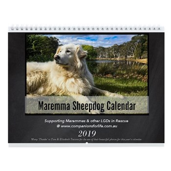 Maremma Sheepdog Wall Calendar