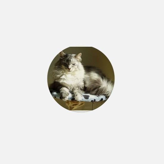 Cute Norwegian forest cat Mini Button