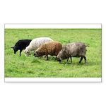 Schoonover Farm Rectangle Sticker 10 pk)