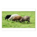 Schoonover Farm Postcards (Package of 8)