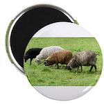 Schoonover Farm Magnet