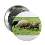 "Schoonover Farm 2.25"" Button (10 pack)"