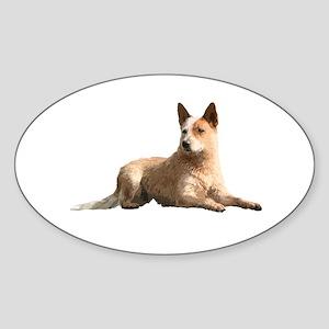 Cattle Dog Sticker (Oval)