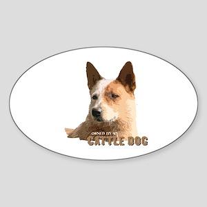 Cattle Dog Oval Sticker