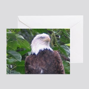 Eagle Portrait 1 Greeting Cards (Pk of 10)
