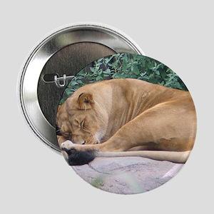Sleepy Lioness Button