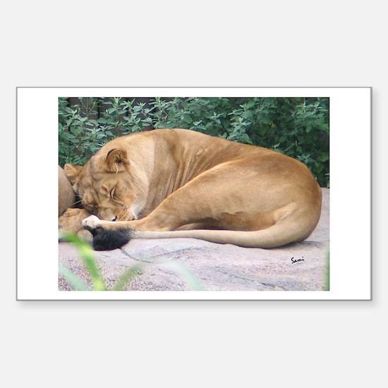 Sleepy Lioness Rectangle Decal