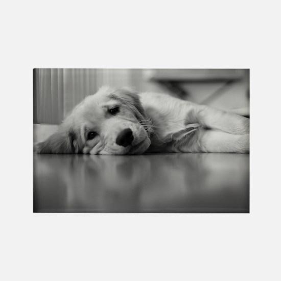 Tired Golden Retriever Puppy Rectangle Magnet