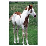 Pony Large Poster