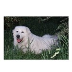 Maremma Postcards (Package of 8)