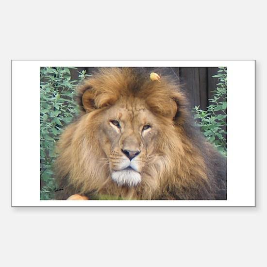 Male Lion Portrait Rectangle Decal