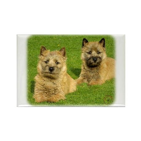 Cairn Terrier puppies 9W048D-035 Rectangle Magnet