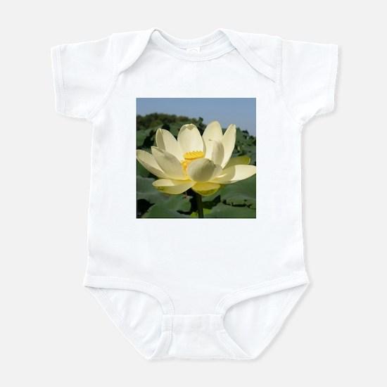 Water Lotus, Flower, Infant Creeper
