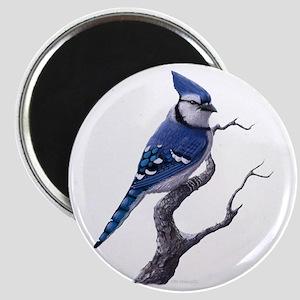 blue jay bird Magnets