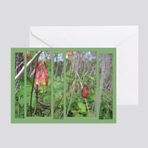 Wild Columbine Greeting Cards (Pk of 10)