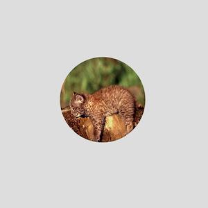 Bobcat Kitten Mini Button