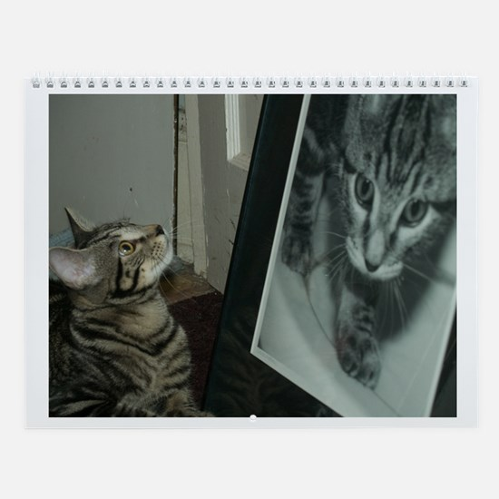 Life and Times of a Kitten Wall Calendar
