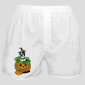 Boston in Pumpkin Boxer Shorts