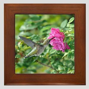 Female Hummingbird Framed Tile