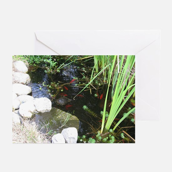 Pond, turtle, fish - Greeting Cards (Pk of 10)