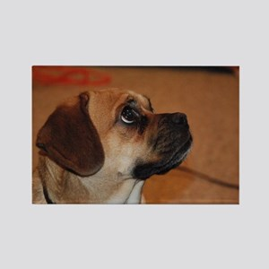 Dog-puggle Rectangle Magnet