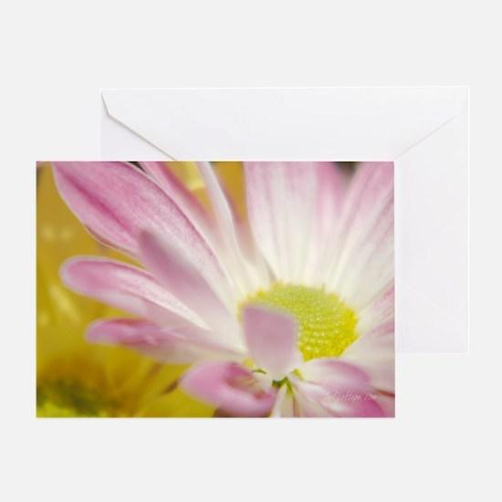 Daisy Splash 4 Greeting Card