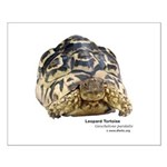 Leopard Tortoise Small Poster