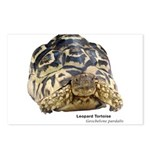 Leopard Tortoise Postcards (Package of 8)