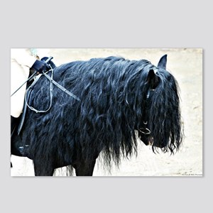 Fell Pony Postcards (Package of 8)