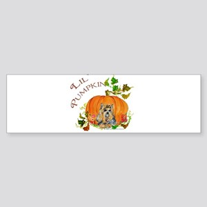 Pumpkin Yorkshire Terrier Bumper Sticker