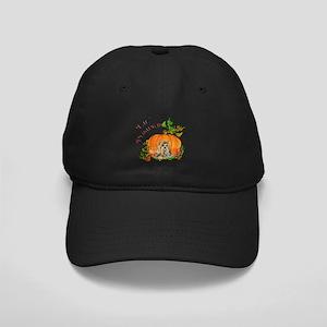 Pumpkin Yorkshire Terrier Black Cap