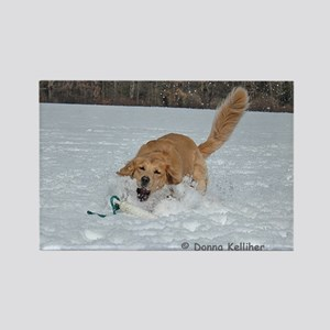 Golden Retrieving in the Snow Rectangle Magnet