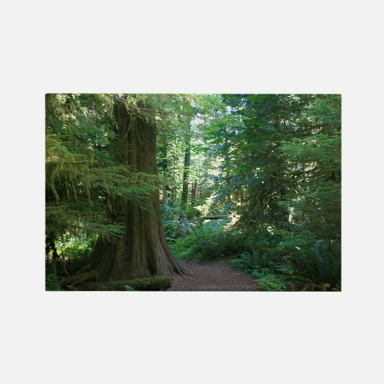Cathedral Grove Rectangle Magnet