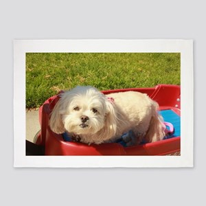 Small white Lhasa type dog in a wag 5'x7'Area Rug