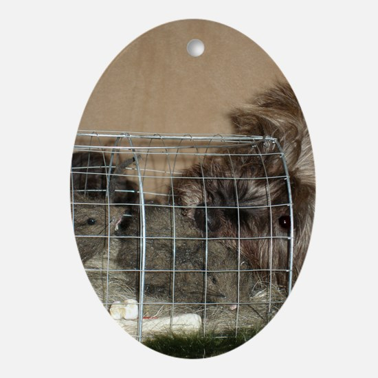 Cairn Terrier Earthdog Oval Ornament